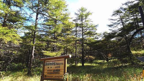 10-3特別母樹林.jpg