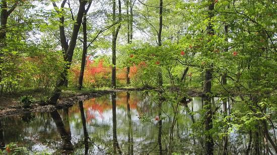 11-1ミズスマシの池.jpg