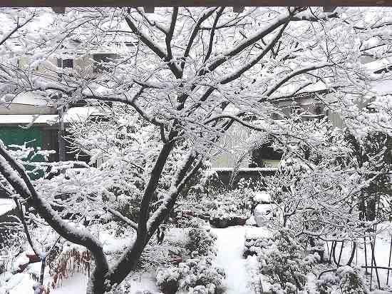 11-雪の華.jpg