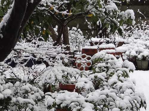 12-雪の華.jpg