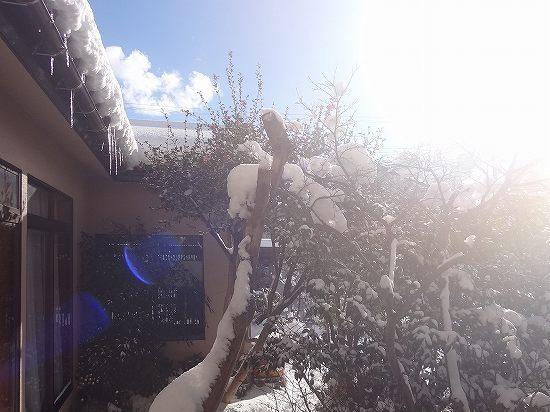 15-雪の翌朝.jpg
