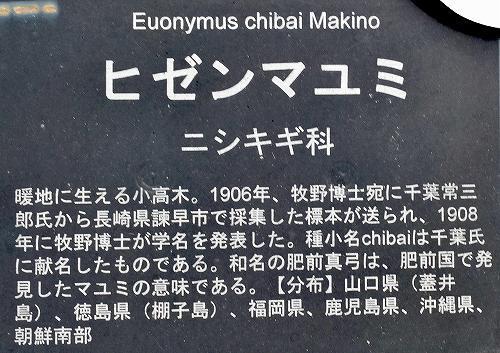 21-16ヒゼンマユミ3.jpg