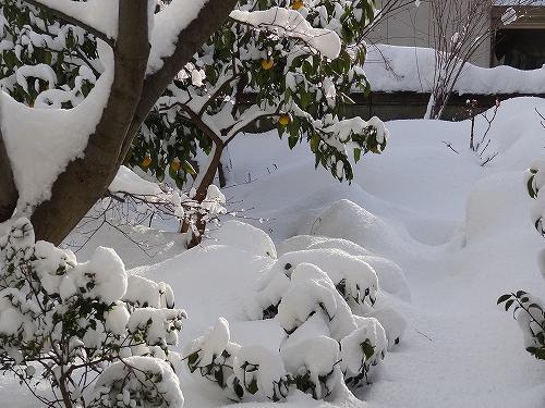 21-雪の翌朝.jpg