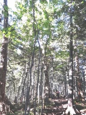 22-1針葉樹林帯_03.jpg