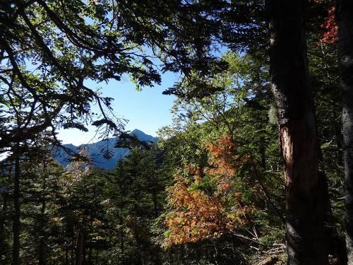 24-2針葉樹林帯上部1.jpg
