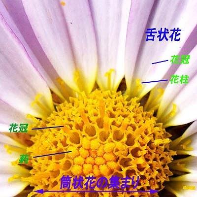 33-52小花.jpg