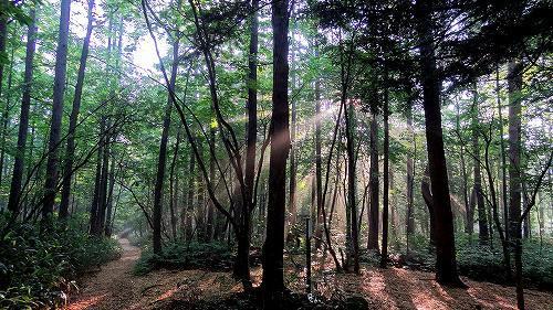 59-0森林浴.jpg